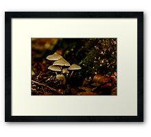 The Fungi family Framed Print