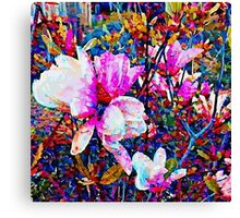 Magnolia blossoms Canvas Print