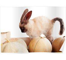 Cat rabbit Poster