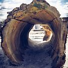 Hollow by Stevie B