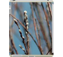 Pussy willow branches iPad Case/Skin