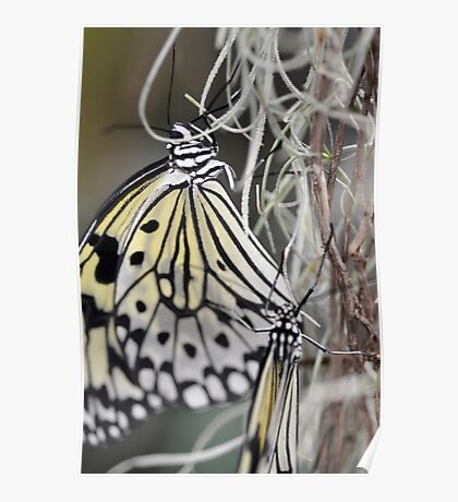 Rice Paper Butterflies at Wisley Poster
