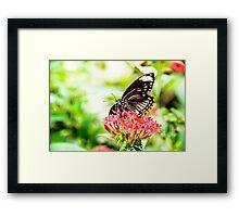Beautiful Butterfly Framed Print