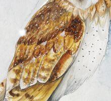 Barn Owl in the Snow Sticker