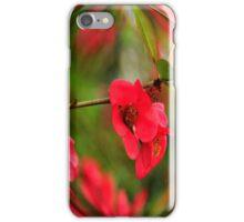 Red Japanese  Flowering Cherry Tree... iPhone Case/Skin