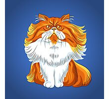 Cute red fluffy Persian cat  Photographic Print