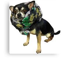 cute Chihuahua Canvas Print