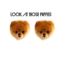 Look At those Puppies Photographic Print