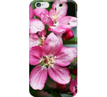 Flowers - crabapple blossoms (2010) iPhone Case/Skin