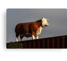 Why Is There A Bull On My Fence and Who Broke His Horn?  Canvas Print