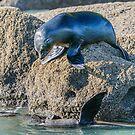 Seals at Play by Werner Padarin