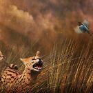 Servals by Christina Brundage