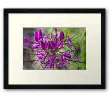 Deep Lavender Garden Framed Print
