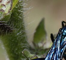 Iridescent Bug Sticker