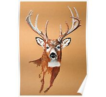 White-tailed Deer Buck by Dennis Dalton Poster