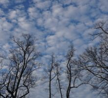 Trees and Cloudy Sky Sticker
