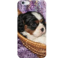 Cavalier Pups In Basket iPhone Case/Skin
