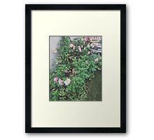 my garden: summer Framed Print