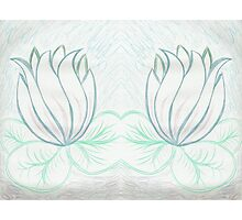 Lovely Light Lily Photographic Print