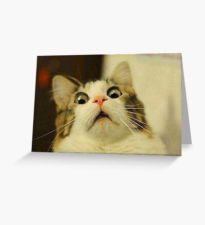 weird cat Greeting Card