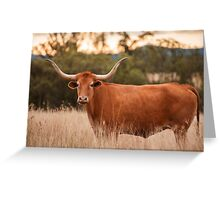 Longhorn Cow in the paddock Greeting Card