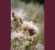 Cirsium arvense is a species of Cirsium flowers Unisex T-Shirt