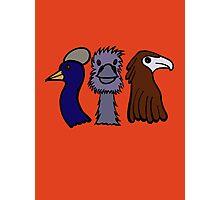 Bird Trio #3 Photographic Print