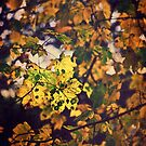 Golden Leaves by Vicki Field