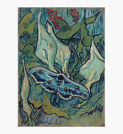 1889-Vincent van Gogh-Emperor moth-24,5x33,5 Photographic Print