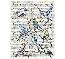 Songbirds Photographic Print