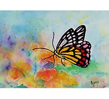 Song of Joy - Butterfly Photographic Print