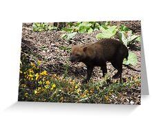 Smilin' Jack (Bush Dog) Greeting Card