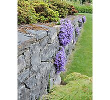Lilac Wall Photographic Print