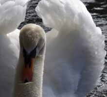 Swan on the lake Sticker