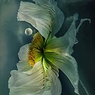 ~ Opium ~ by Alexandra  Lexx