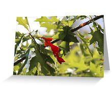 Red Leaf betwen green Leafs Greeting Card