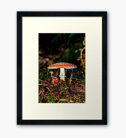 Big mushroom little mushroom Framed Print
