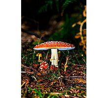 Big mushroom little mushroom Photographic Print