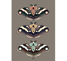 Silk Moths Photographic Print
