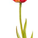 Single red tulip flower watercolor art by Sarah Trett