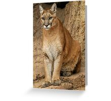 Female Cougar Greeting Card