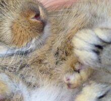 WOW!!- This Is Sooooo Comfy!! - Baby Bunny - NZ Sticker