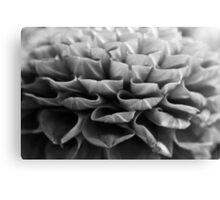 flower close up - black/white - three Canvas Print