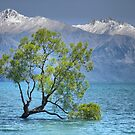The Wanaka Tree ( 1b ) - A Different Aspect on a Different Day. by Larry Lingard-Davis