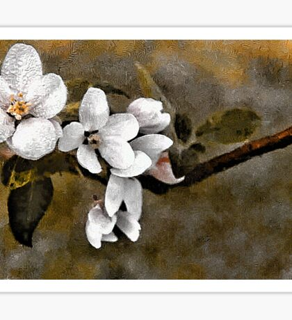 Apple Blossoms - N. Waterford, Maine Sticker