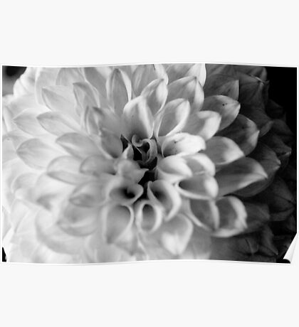 flower close up - black/white - six Poster
