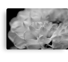 flower close up - black/white - seven Canvas Print