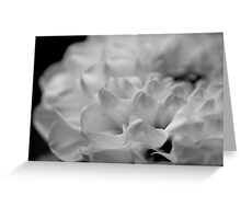 flower close up - black/white - seven Greeting Card