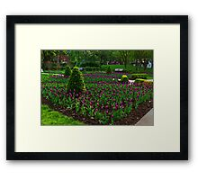 Royal Purple Tulips Framed Print