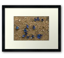The Butterfly Convention Framed Print